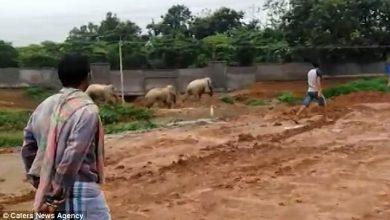Photo of تدابير يائسة من الفيلة للهروب من القرويين الغاضبين